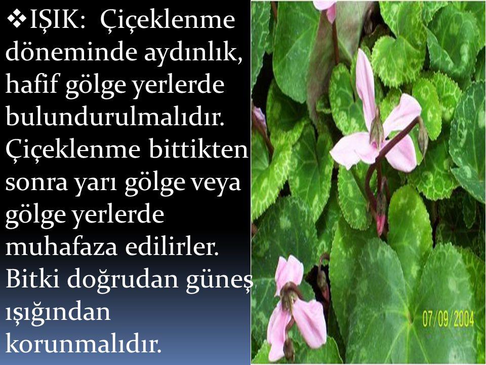  IŞIK: Çiçeklenme döneminde aydınlık, hafif gölge yerlerde bulundurulmalıdır. Çiçeklenme bittikten sonra yarı gölge veya gölge yerlerde muhafaza edil