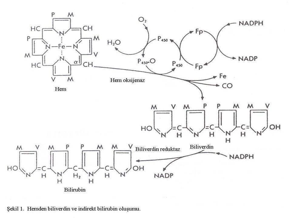 Bilirubin Metabolizması...