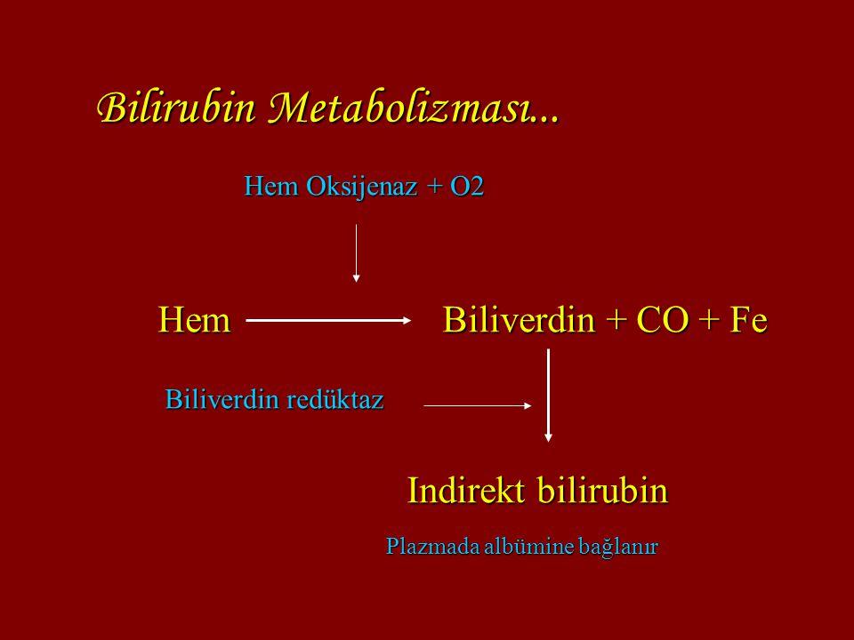 Bilirubin Metabolizması... Hem Biliverdin + CO + Fe Hem Oksijenaz + O2 Biliverdin redüktaz Indirekt bilirubin Plazmada albümine bağlanır