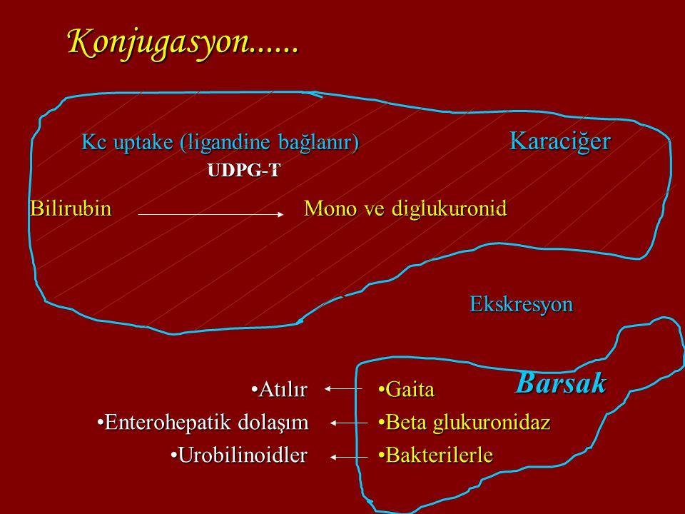 Bilirubin yapımında artış Hemolitik hastalık İmmün Mekanizmalar Rh alloimmünizasyonu ABO ve diğer kan grubu uygunsuzlukları Herediter Eritrosit membran defektleri (Sferositoz, eliptositoz, stomatositoz, piknositoz) Eritrosit enzim defektleri (Glukoz-6-fosfat dehidrogenaz enzim eksikliği) Hemoglobinopatiler ( Alfa Talasemi, beta-γ-talasemi) Bilirubin yapındaki artışla ilgili diğer sebepler Sepsis Dissemine intravasküler koagülopati Ekstravazasyon (Hematom, pulmoner, serebral kanama) Polisitemi Diabetik annenin makrozomik bebeği Bilirübinin enterohepatik sirkülasyonundaki artış Annesütü sarılığı Pilor stenozu İnce yada kalın barsak barsak obstrüksiyonu yada ileus