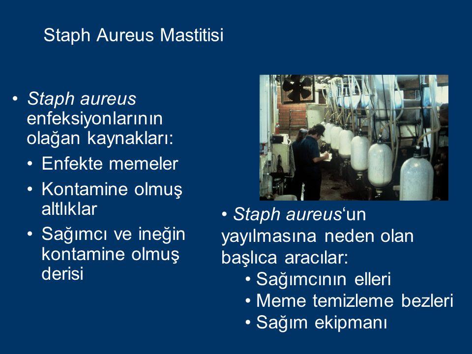 Staph Aureus Mastitisi Staph aureus, meme dokusuna, çoğunlukla meme başı kanalından girer.