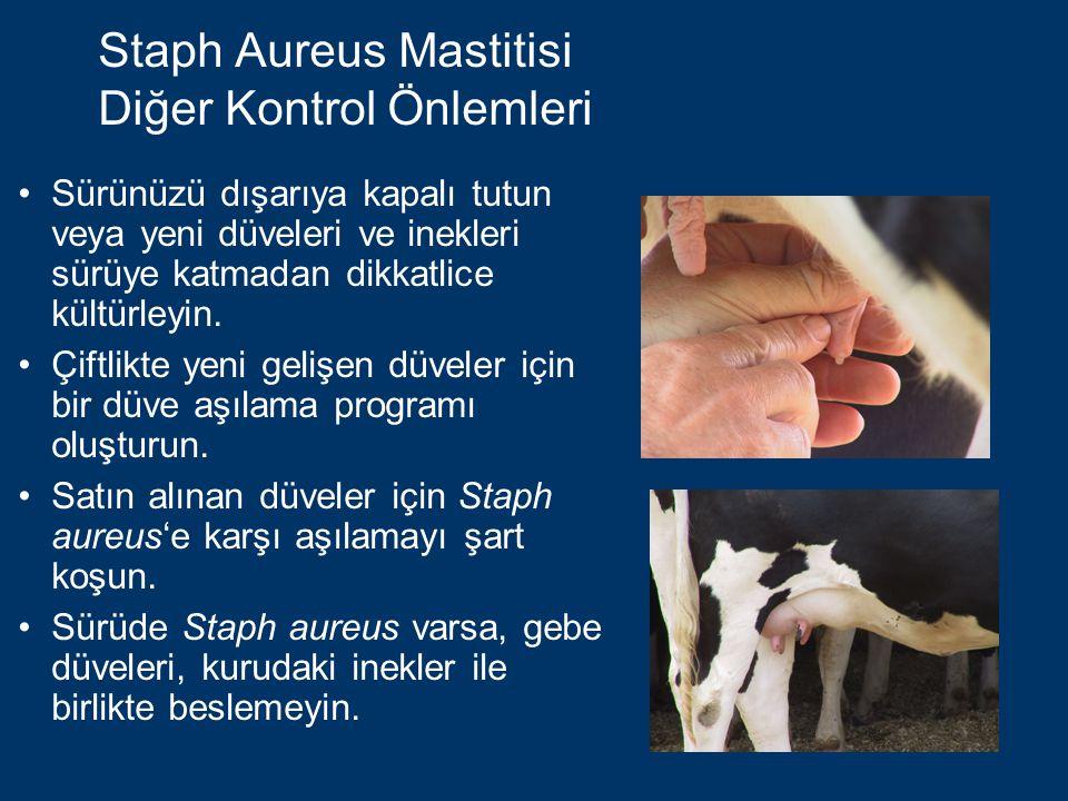 Staph Aureus Mastitisi Diğer Kontrol Önlemleri Sürünüzü dışarıya kapalı tutun veya yeni düveleri ve inekleri sürüye katmadan dikkatlice kültürleyin.