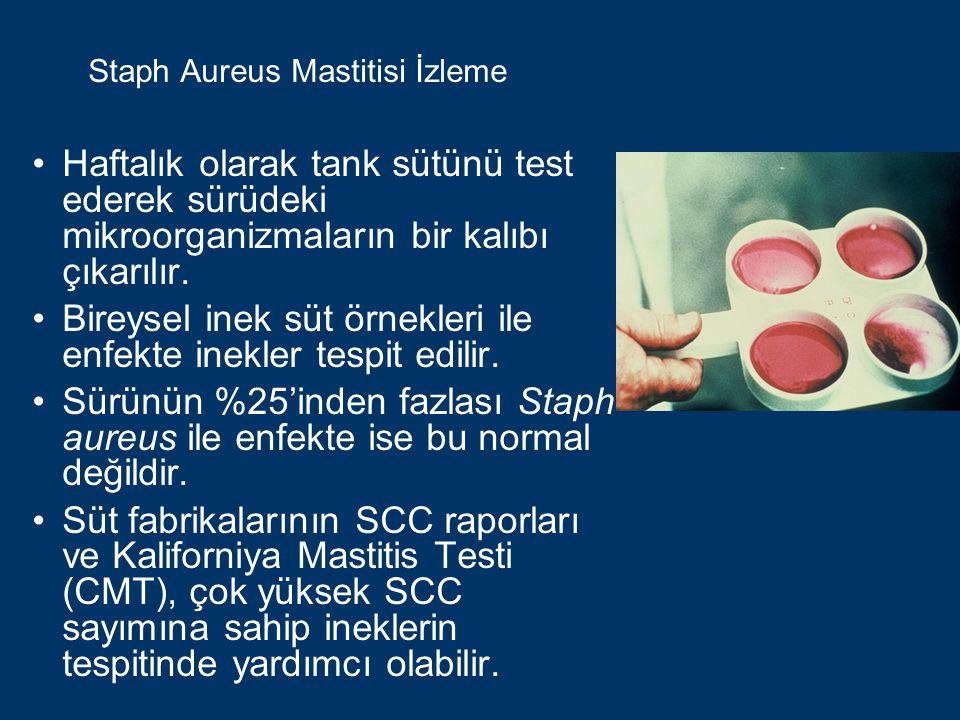 Staph Aureus Mastitisi İzleme Haftalık olarak tank sütünü test ederek sürüdeki mikroorganizmaların bir kalıbı çıkarılır.