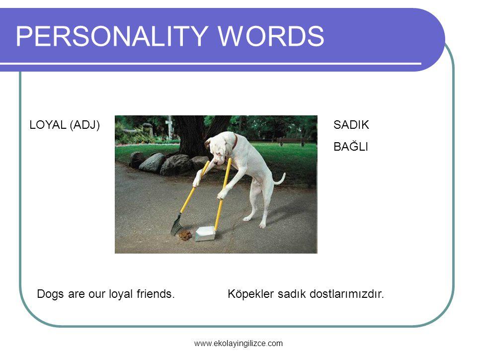 PERSONALITY WORDS LOYAL (ADJ)SADIK BAĞLI Dogs are our loyal friends.Köpekler sadık dostlarımızdır. www.ekolayingilizce.com