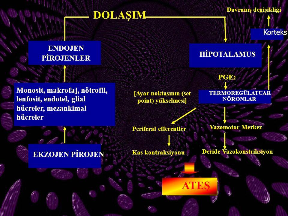 DOLAŞIM ENDOJEN PİROJENLER Monosit, makrofaj, nötrofil, lenfosit, endotel, glial hücreler, mezankimal hücreler EKZOJEN PİROJEN TERMOREGÜLATUAR NÖRONLA