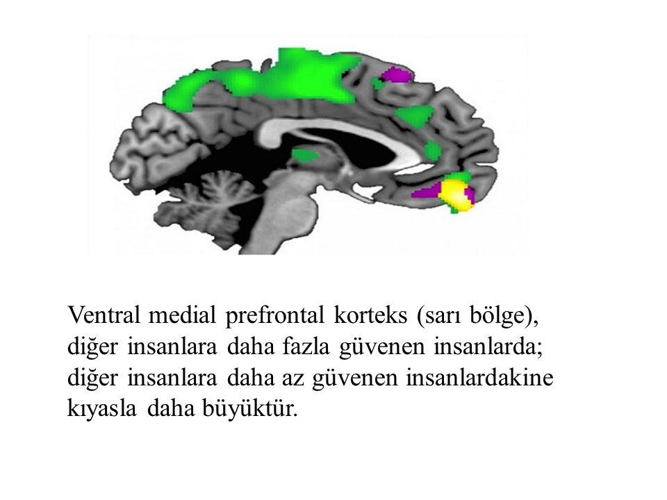 Ventral medial prefrontal korteks (sarı bölge), diğer insanlara daha fazla güvenen insanlarda; diğer insanlara daha az güvenen insanlardakine kıyasla