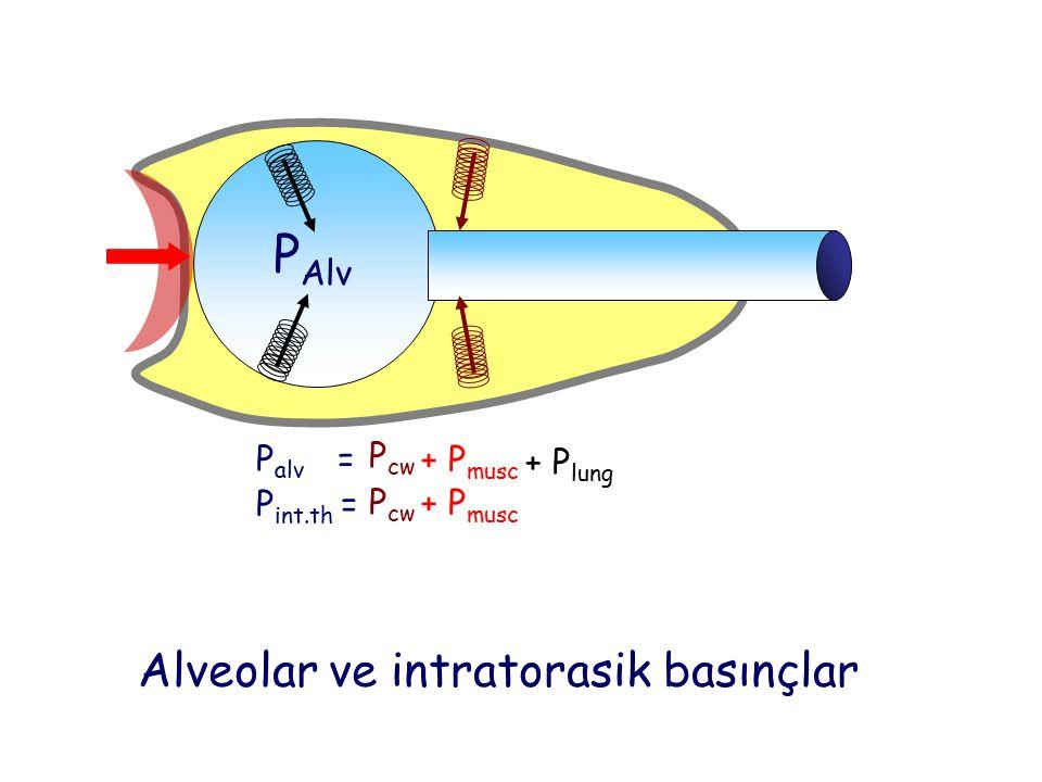 Alveolar ve intratorasik basınçlar P Alv P alv = P int.th = P cw + P lung + P musc