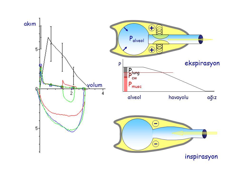 akım volum alveolhavayoluağız P P musc P cw P lung P alveol + + ekspirasyon - - inspirasyon