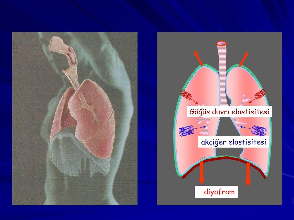 akciğer elastisitesi Göğüs duvrı elastisitesi diyafram