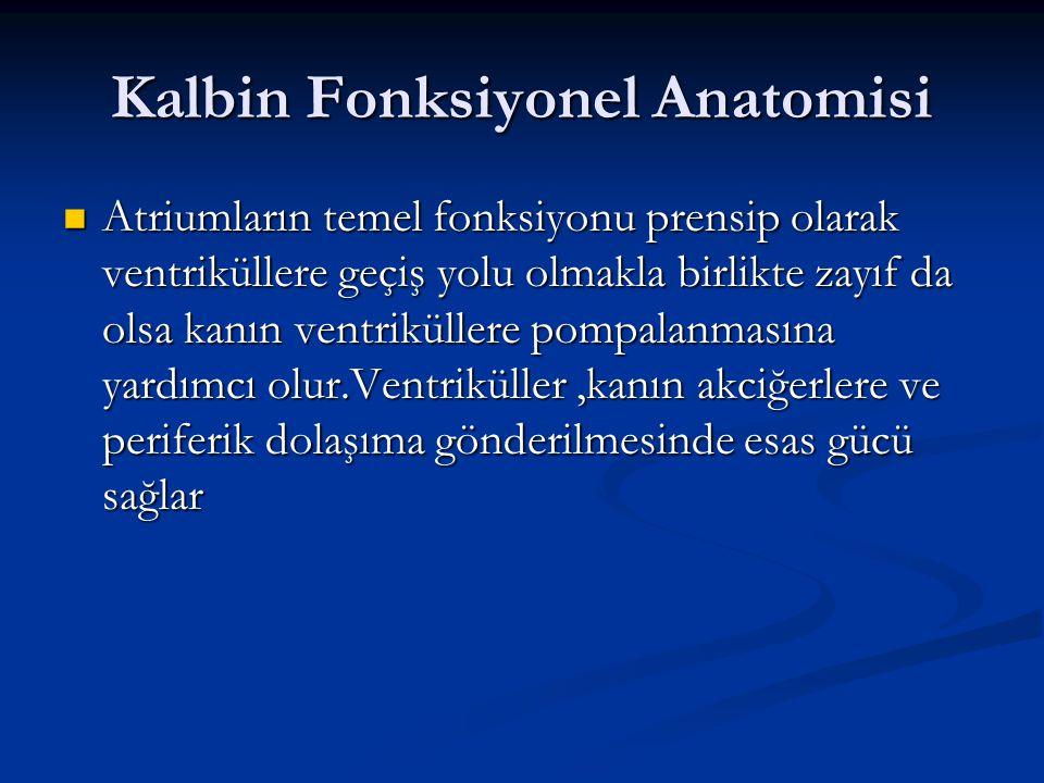 Kalbin Fonksiyonel Anatomisi Atriumların temel fonksiyonu prensip olarak ventriküllere geçiş yolu olmakla birlikte zayıf da olsa kanın ventriküllere p