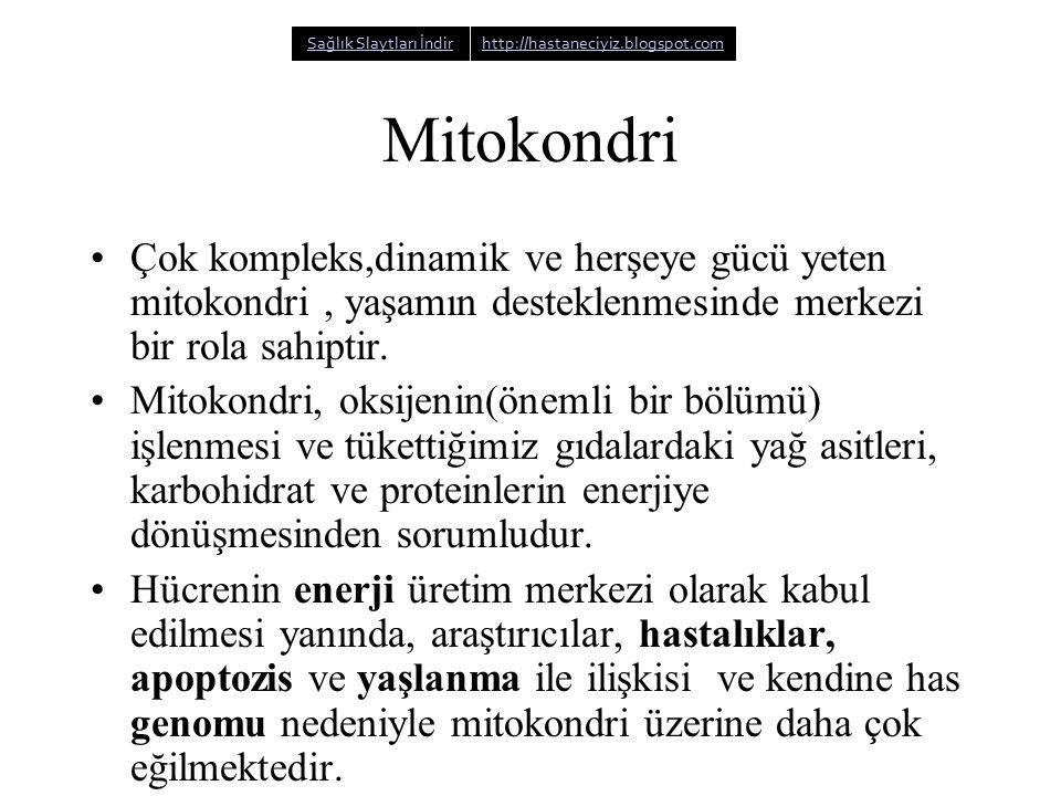 Mitokondri Çok kompleks,dinamik ve herşeye gücü yeten mitokondri, yaşamın desteklenmesinde merkezi bir rola sahiptir. Mitokondri, oksijenin(önemli bir
