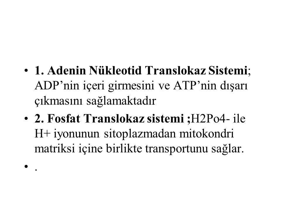 1. Adenin Nükleotid Translokaz Sistemi; ADP'nin içeri girmesini ve ATP'nin dışarı çıkmasını sağlamaktadır 2. Fosfat Translokaz sistemi ;H2Po4- ile H+