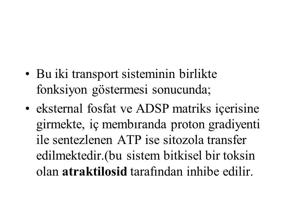 Bu iki transport sisteminin birlikte fonksiyon göstermesi sonucunda; eksternal fosfat ve ADSP matriks içerisine girmekte, iç membıranda proton gradiye