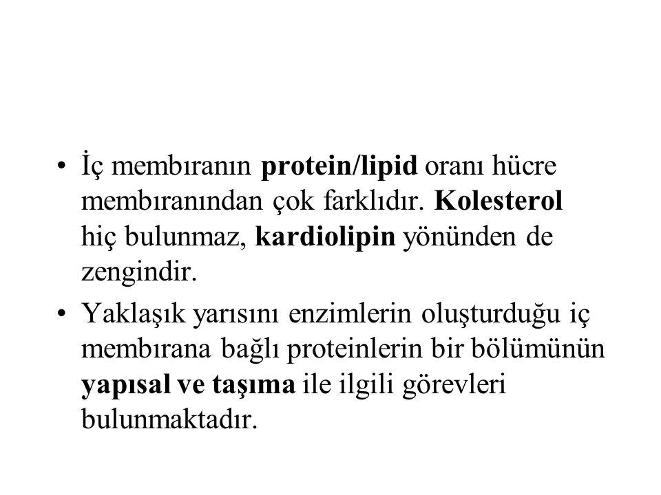 İç membıranın protein/lipid oranı hücre membıranından çok farklıdır. Kolesterol hiç bulunmaz, kardiolipin yönünden de zengindir. Yaklaşık yarısını enz