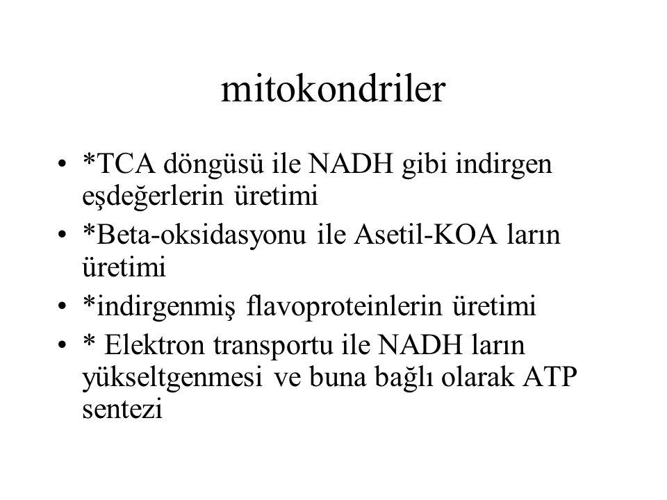mitokondriler *TCA döngüsü ile NADH gibi indirgen eşdeğerlerin üretimi *Beta-oksidasyonu ile Asetil-KOA ların üretimi *indirgenmiş flavoproteinlerin ü