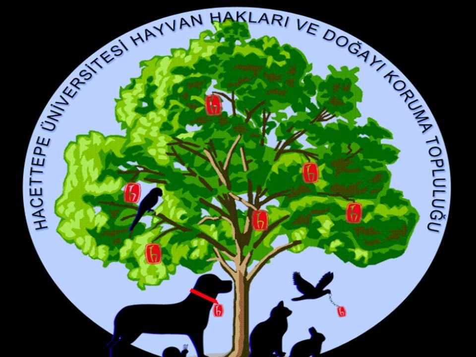 Bölüm Faaliyetleri: Özellikle Beytepe Yerleşkesinde yaşayan yaban hayvanları ile ilgili yapılan çalışmaları takip ederek topluluğumuza konuyla ilgili bilgi aktarımı yapılması.