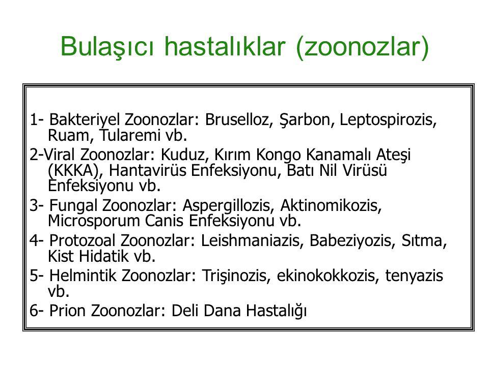 Bulaşıcı hastalıklar (zoonozlar) 1- Bakteriyel Zoonozlar: Bruselloz, Şarbon, Leptospirozis, Ruam, Tularemi vb.