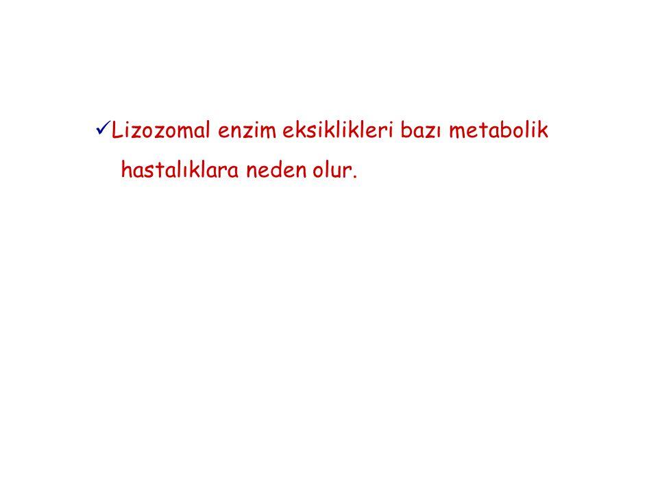 Lizozomal enzim eksiklikleri bazı metabolik hastalıklara neden olur.