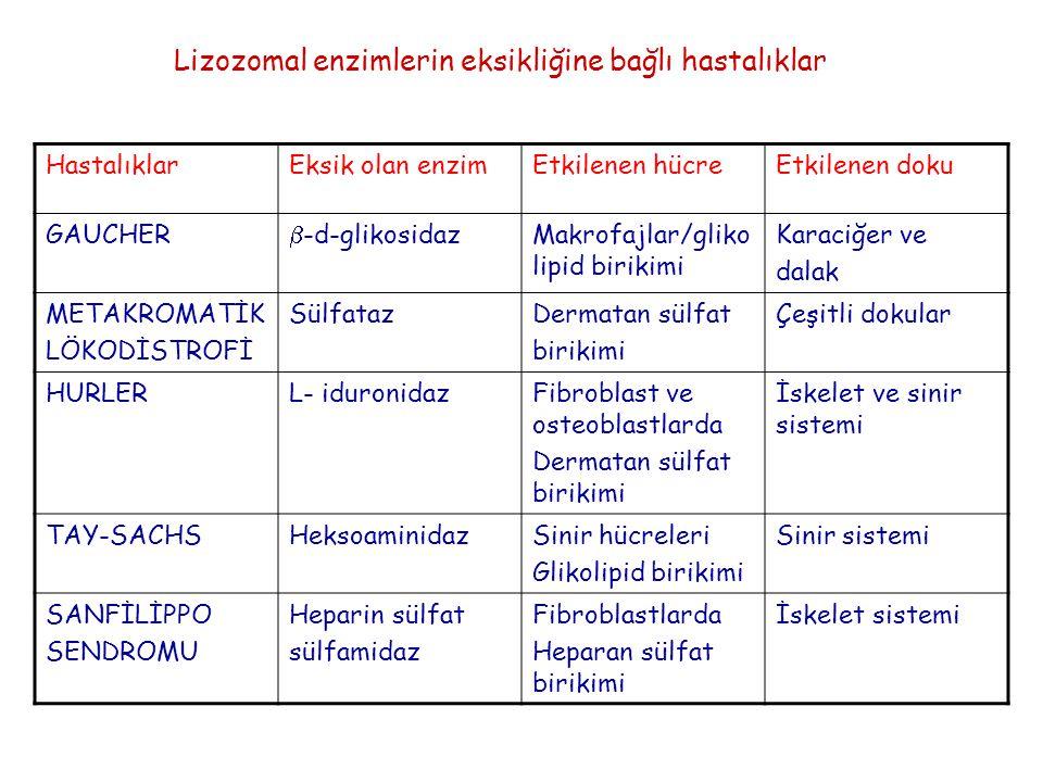 Lizozomal enzimlerin eksikliğine bağlı hastalıklar HastalıklarEksik olan enzimEtkilenen hücreEtkilenen doku GAUCHER  -d-glikosidazMakrofajlar/gliko l