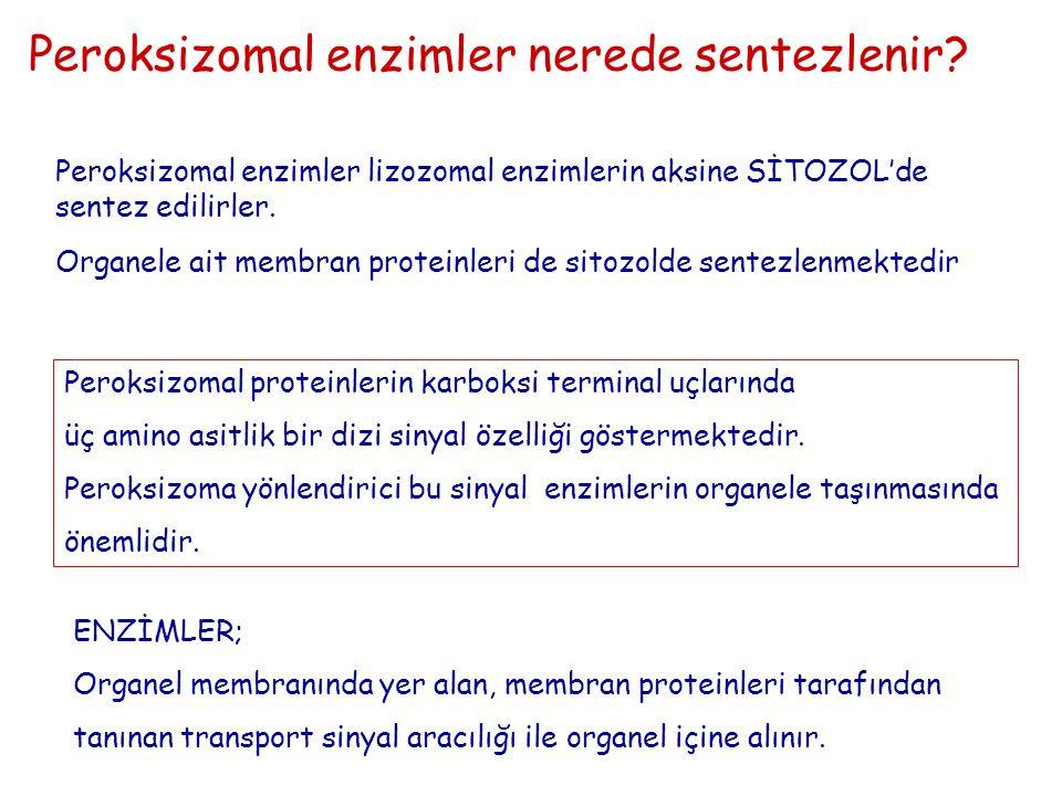 Peroksizomal enzimler nerede sentezlenir? Peroksizomal enzimler lizozomal enzimlerin aksine SİTOZOL'de sentez edilirler. Peroksizomal proteinlerin kar