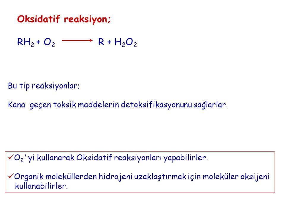Oksidatif reaksiyon; RH 2 + O 2 R + H 2 O 2 Bu tip reaksiyonlar; Kana geçen toksik maddelerin detoksifikasyonunu sağlarlar. O 2 ' yi kullanarak Oksida