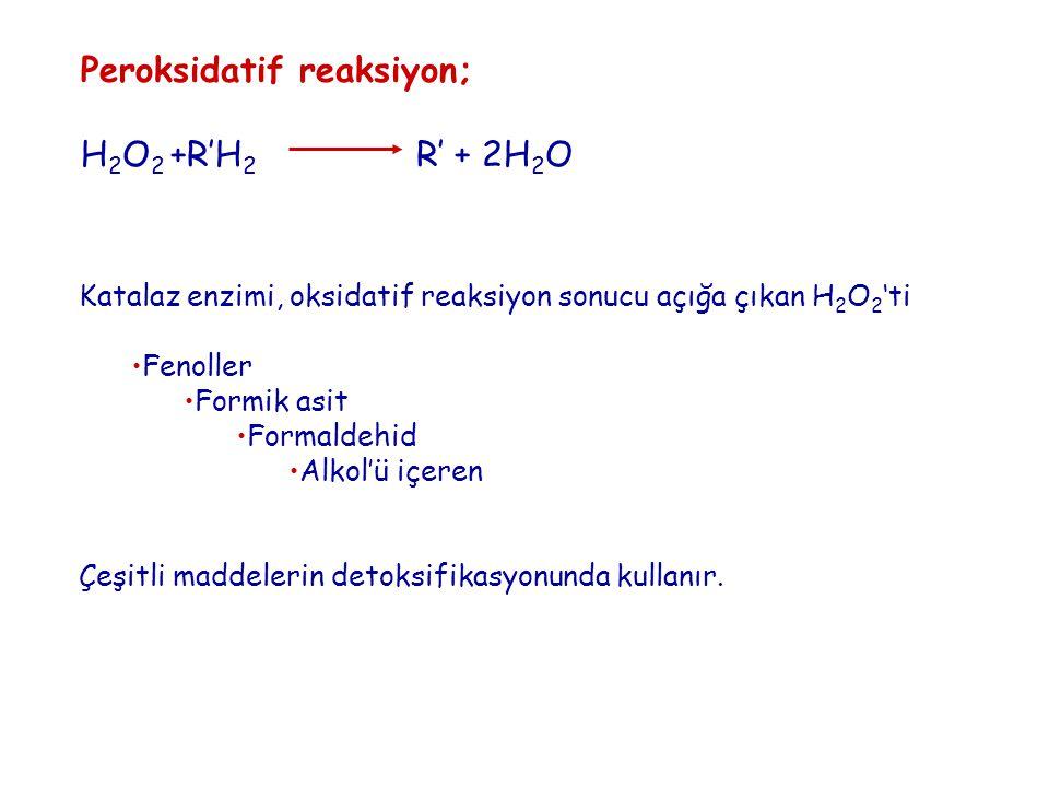 Peroksidatif reaksiyon; H 2 O 2 +R'H 2 R' + 2H 2 O Katalaz enzimi, oksidatif reaksiyon sonucu açığa çıkan H 2 O 2 'ti Fenoller Formik asit Formaldehid