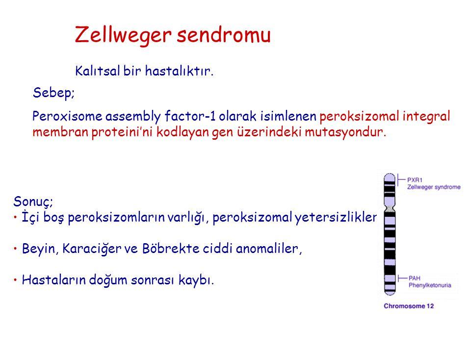 Zellweger sendromu Kalıtsal bir hastalıktır. Sonuç; İçi boş peroksizomların varlığı, peroksizomal yetersizlikler, Beyin, Karaciğer ve Böbrekte ciddi a