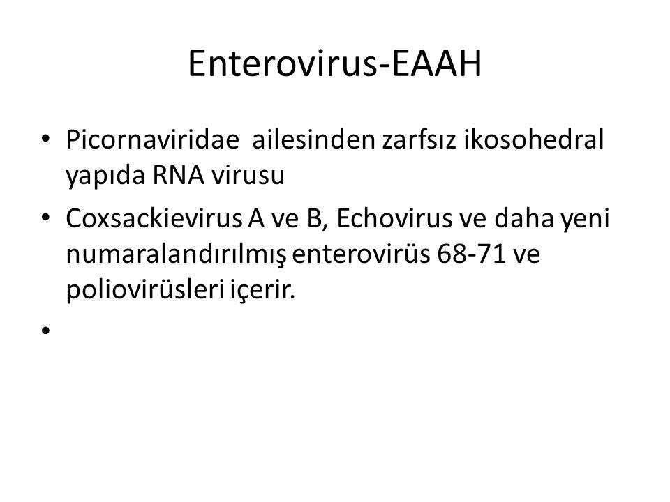 Enterovirus-EAAH Picornaviridae ailesinden zarfsız ikosohedral yapıda RNA virusu Coxsackievirus A ve B, Echovirus ve daha yeni numaralandırılmış enter