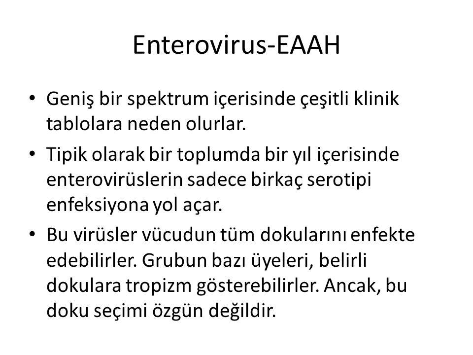 Enterovirus-EAAH Geniş bir spektrum içerisinde çeşitli klinik tablolara neden olurlar. Tipik olarak bir toplumda bir yıl içerisinde enterovirüslerin s