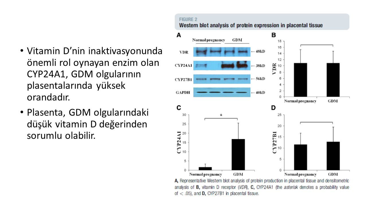 Vitamin D'nin inaktivasyonunda önemli rol oynayan enzim olan CYP24A1, GDM olgularının plasentalarında yüksek orandadır. Plasenta, GDM olgularındaki dü