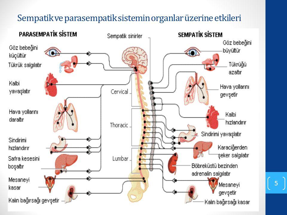 Sempatik ve parasempatik sistemin organlar üzerine etkileri 5