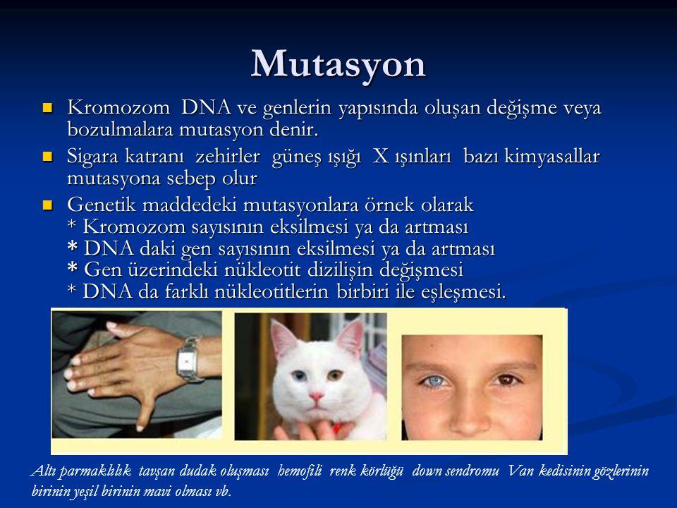 Mutasyon Kromozom DNA ve genlerin yapısında oluşan değişme veya bozulmalara mutasyon denir. Kromozom DNA ve genlerin yapısında oluşan değişme veya boz