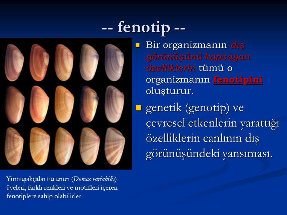-- fenotip -- Bir organizmanın dış görünüşünü kapsayan özelliklerin tümü o organizmanın fenotipini oluşturur. Bir organizmanın dış görünüşünü kapsayan