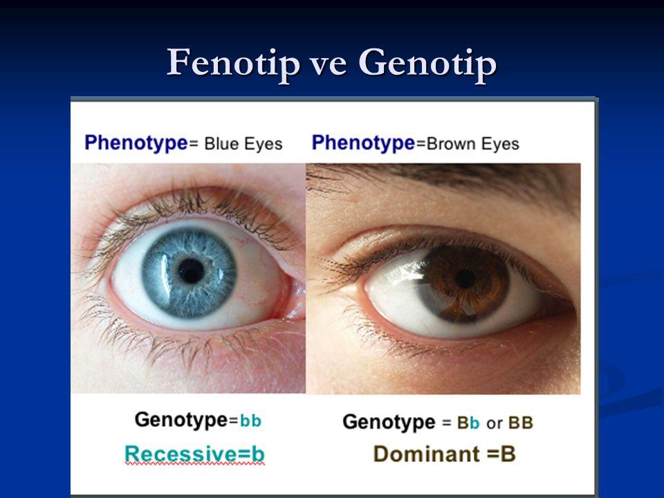 Fenotip ve Genotip