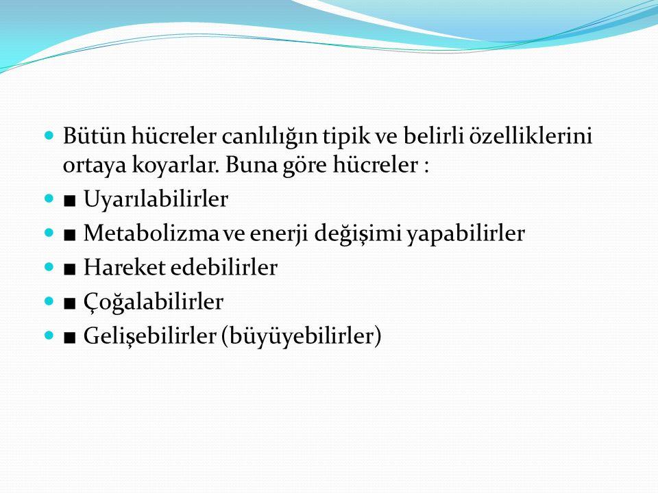 Bütün hücreler canlılığın tipik ve belirli özelliklerini ortaya koyarlar. Buna göre hücreler : ■ Uyarılabilirler ■ Metabolizma ve enerji değişimi yapa