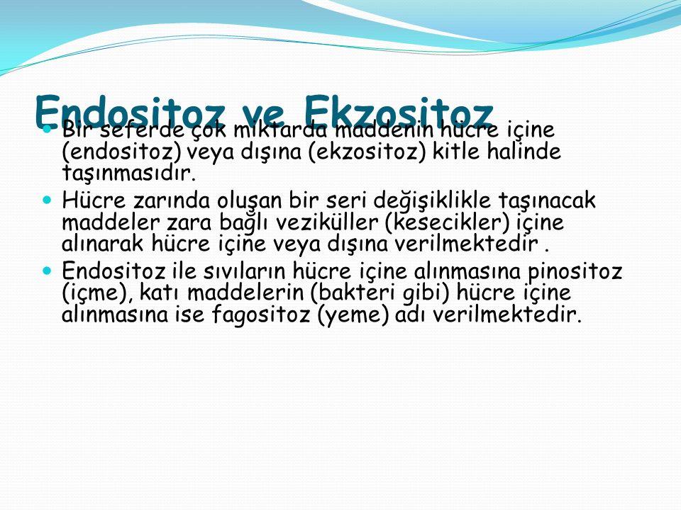 Endositoz ve Ekzositoz Bir seferde çok miktarda maddenin hücre içine (endositoz) veya dışına (ekzositoz) kitle halinde taşınmasıdır. Hücre zarında olu