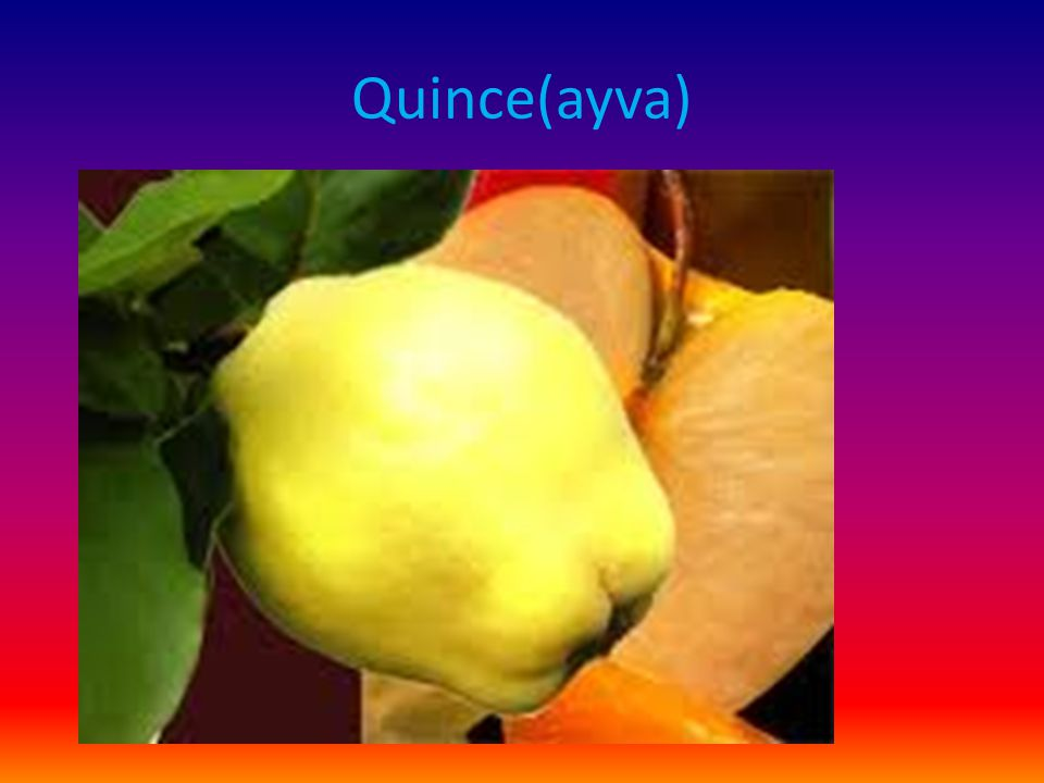 Quince(ayva)