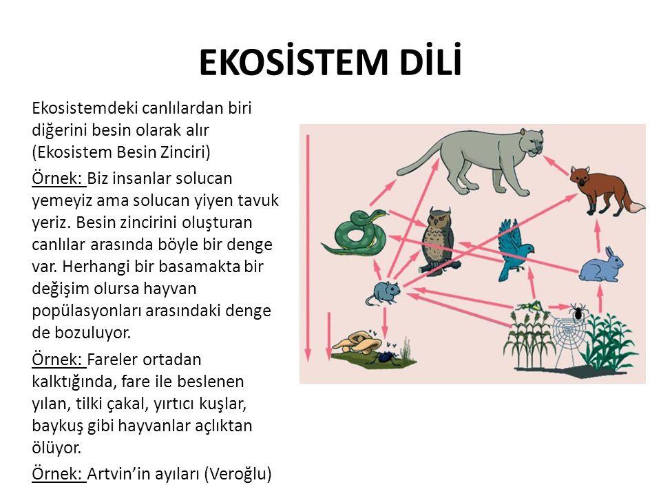 EKOSİSTEM DİLİ Ekosistemdeki canlılardan biri diğerini besin olarak alır (Ekosistem Besin Zinciri) Örnek: Biz insanlar solucan yemeyiz ama solucan yiy