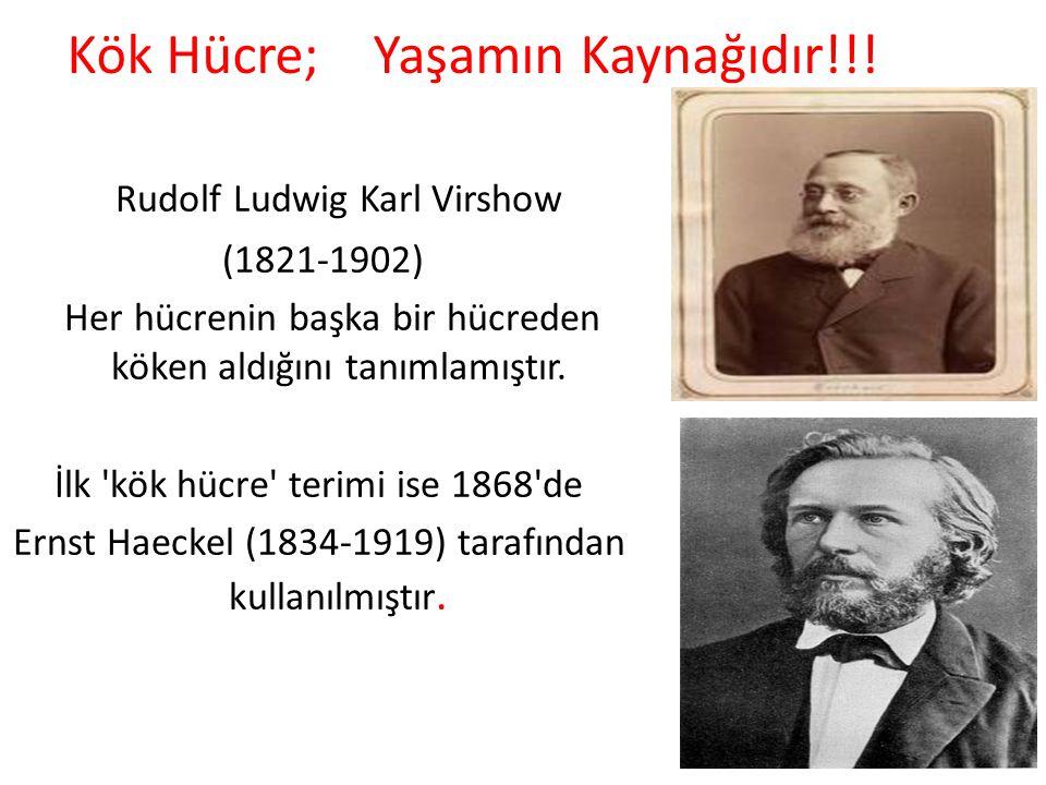 Kök Hücre; Yaşamın Kaynağıdır!!! Rudolf Ludwig Karl Virshow (1821-1902) Her hücrenin başka bir hücreden köken aldığını tanımlamıştır. İlk 'kök hücre'