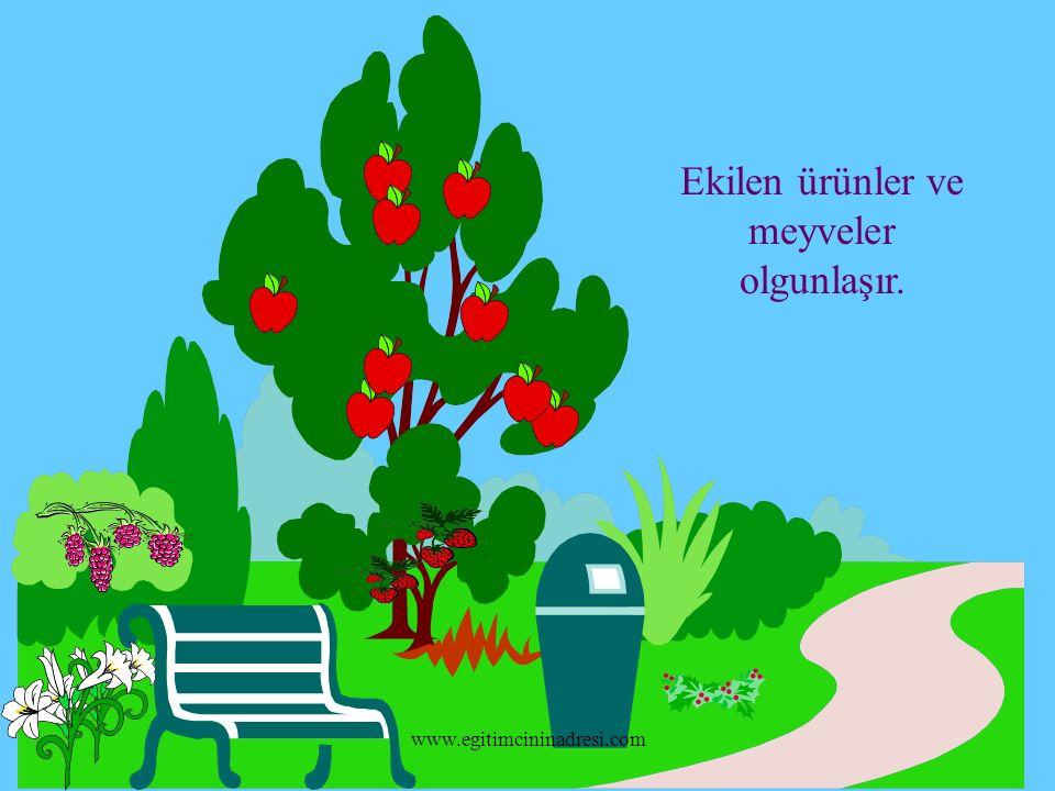 Ekilen ürünler ve meyveler olgunlaşır. www.egitimcininadresi.com
