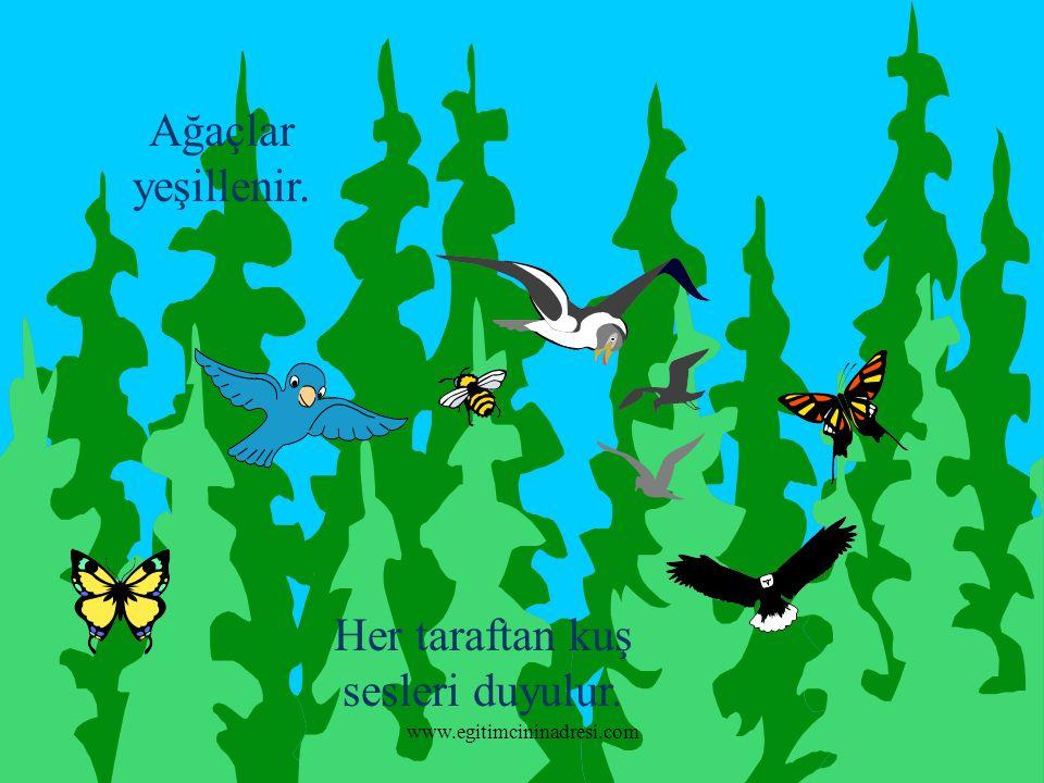 Ağaçlar yeşillenir. Her taraftan kuş sesleri duyulur. www.egitimcininadresi.com