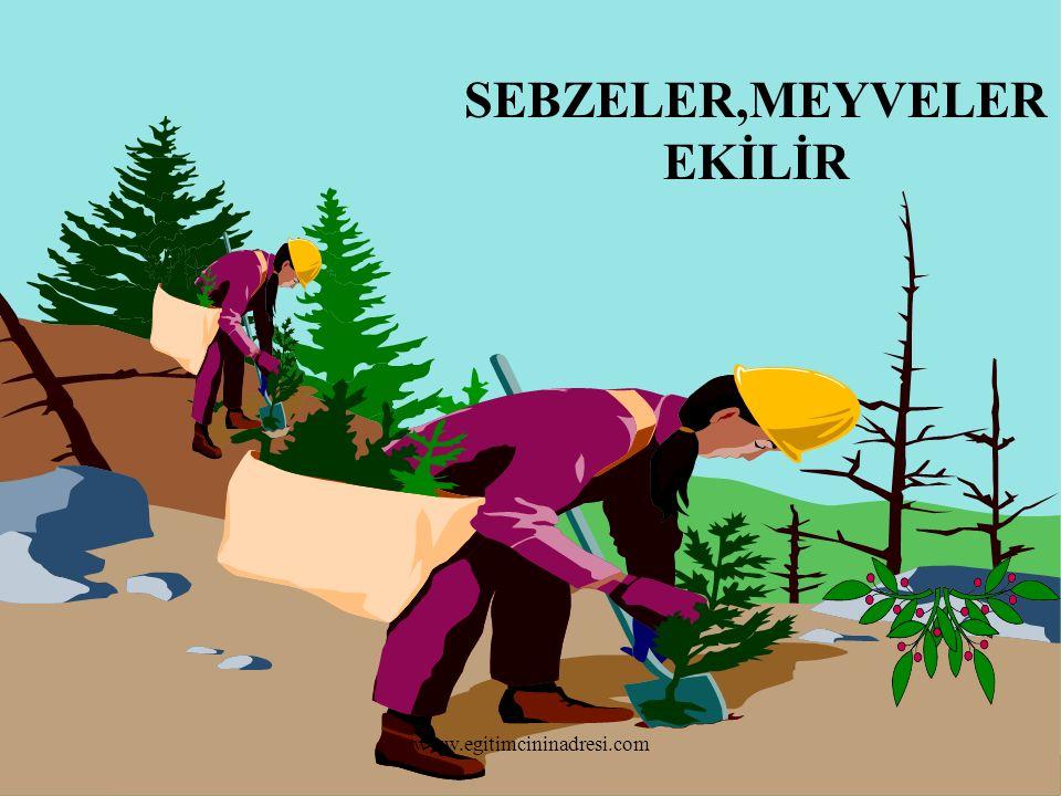SEBZELER,MEYVELER EKİLİR www.egitimcininadresi.com