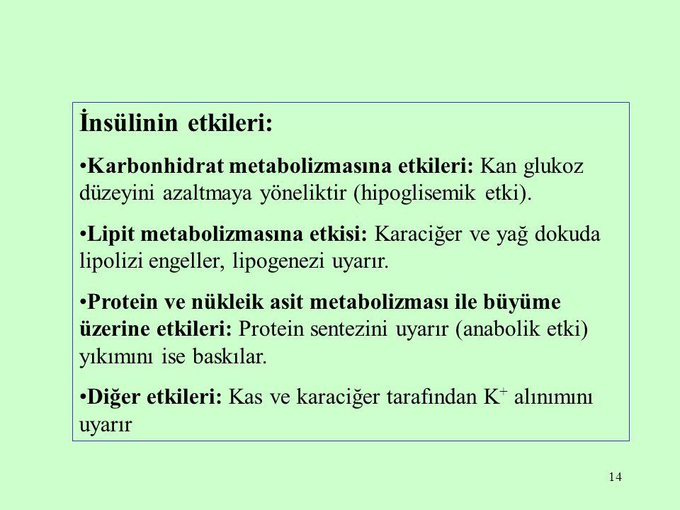 14 İnsülinin etkileri: Karbonhidrat metabolizmasına etkileri: Kan glukoz düzeyini azaltmaya yöneliktir (hipoglisemik etki). Lipit metabolizmasına etki