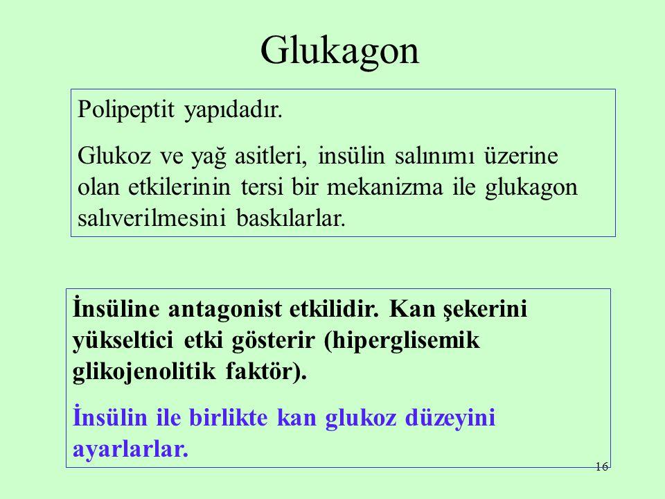 16 Glukagon Polipeptit yapıdadır. Glukoz ve yağ asitleri, insülin salınımı üzerine olan etkilerinin tersi bir mekanizma ile glukagon salıverilmesini b