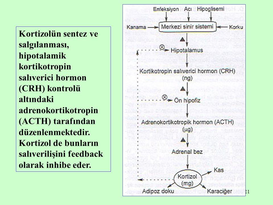 21 Kortizolün sentez ve salgılanması, hipotalamik kortikotropin salıverici hormon (CRH) kontrolü altındaki adrenokortikotropin (ACTH) tarafından düzen
