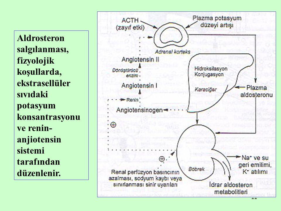 22 Aldrosteron salgılanması, fizyolojik koşullarda, ekstrasellüler sıvıdaki potasyum konsantrasyonu ve renin- anjiotensin sistemi tarafından düzenleni