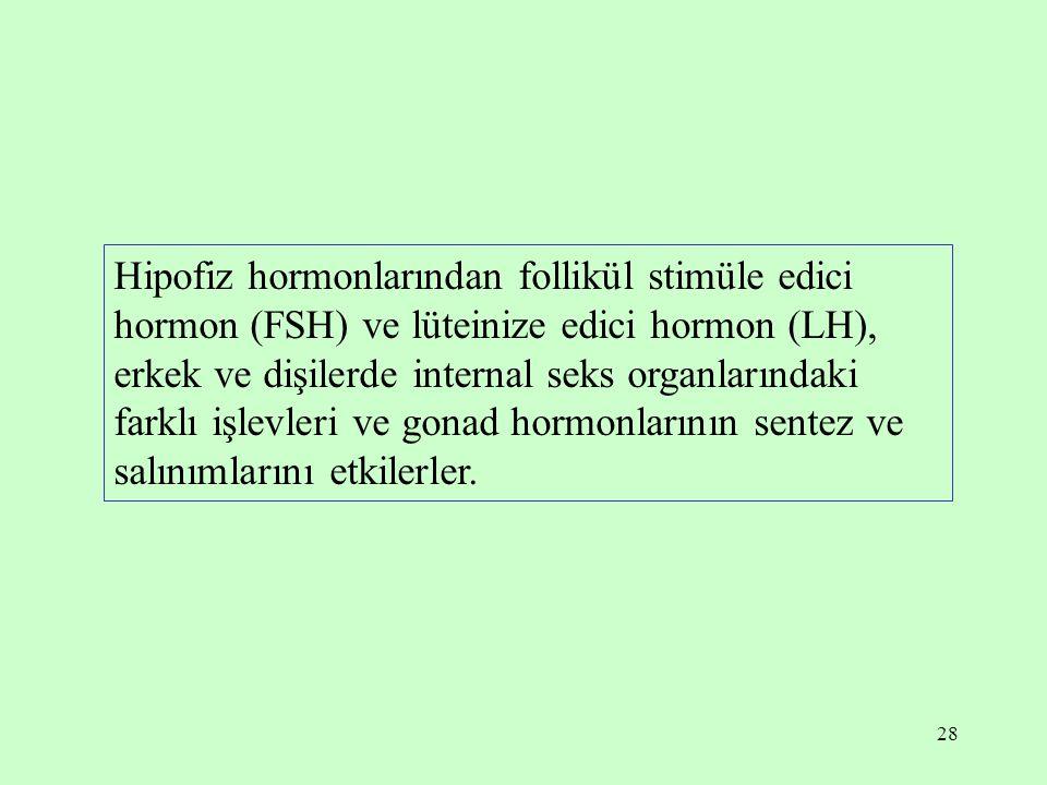 28 Hipofiz hormonlarından follikül stimüle edici hormon (FSH) ve lüteinize edici hormon (LH), erkek ve dişilerde internal seks organlarındaki farklı i