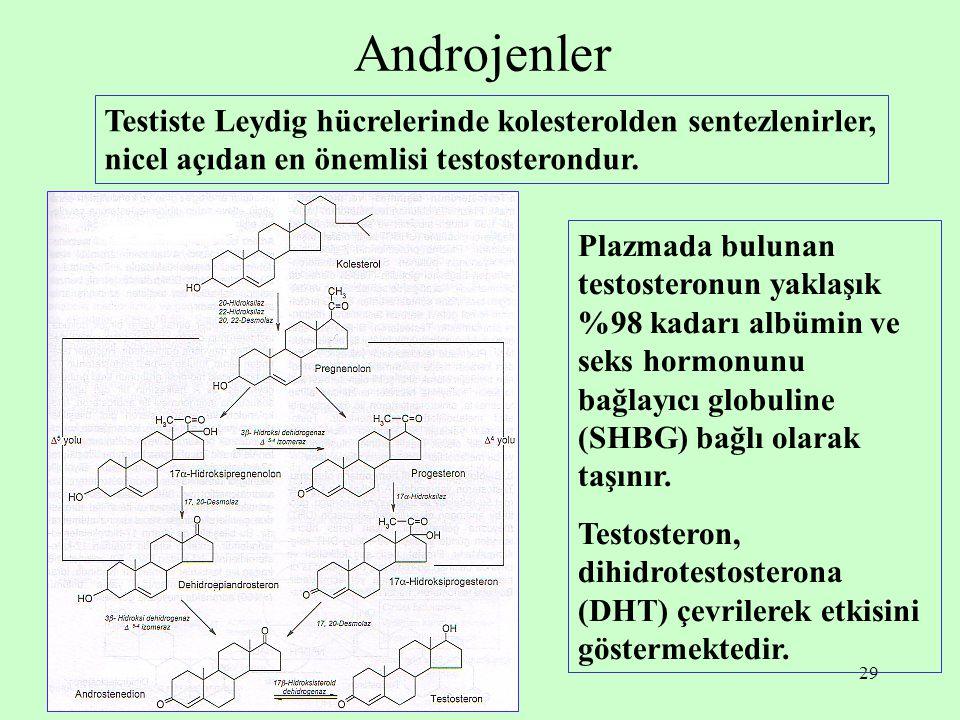 29 Androjenler Testiste Leydig hücrelerinde kolesterolden sentezlenirler, nicel açıdan en önemlisi testosterondur. Plazmada bulunan testosteronun yakl