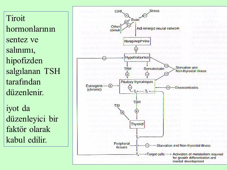 3 Tiroit hormonlarının sentez ve salınımı, hipofizden salgılanan TSH tarafından düzenlenir. iyot da düzenleyici bir faktör olarak kabul edilir.
