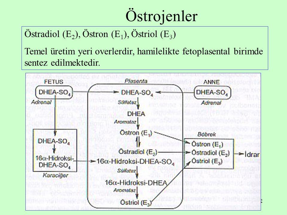 32 Östrojenler Östradiol (E 2 ), Östron (E 1 ), Östriol (E 3 ) Temel üretim yeri overlerdir, hamilelikte fetoplasental birimde sentez edilmektedir.